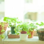 観葉植物の意外な効果とは?おすすめの効果と人気の品種を紹介!