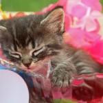 【カワイイは】とり貯めた猫とかの動画を大放出!【作れる?】