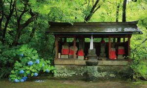 kinsyouji-natsu-1-thumb-651x391-421