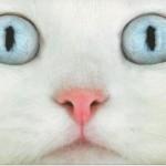 【カワイイは】とり貯めた猫とかの動画を大放出! Part3 【作れる!】