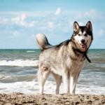今年こそペット同伴で旅行をしたい!関西、近畿圏でペット同伴可能な温泉、宿のまとめ